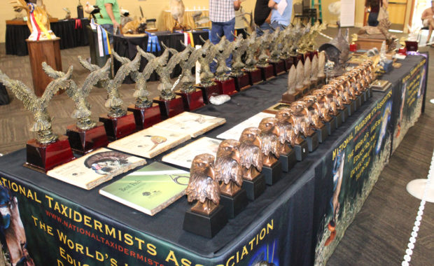National Taxidermy Competition