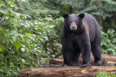 Bear hunt & fishing trip auction