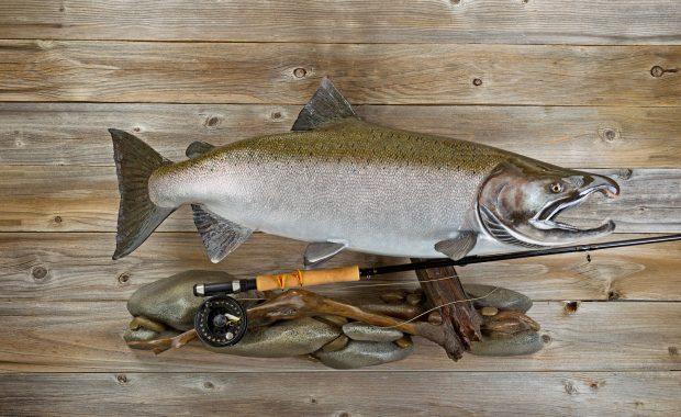 NTA Mount Your Own Fish Seminar