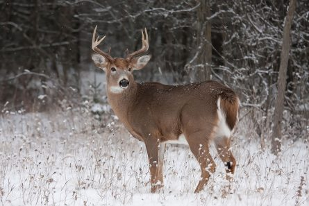 NTA Whitetail Deer Workshop